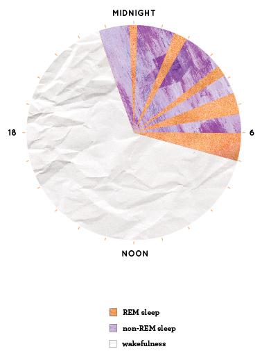 normal sleep cycle chart